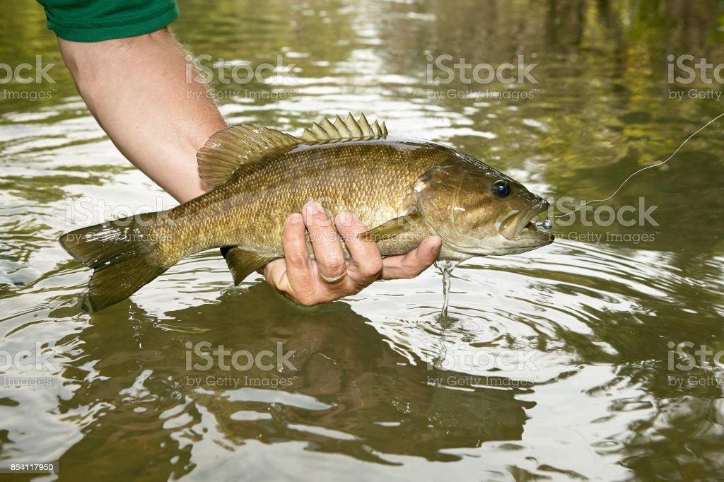 Fisherman displaying a freshly caught bass stock photo