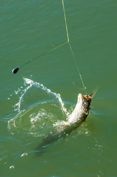 fisherman, fisher, fishman, banker - fishman imagens e fotografias de stock