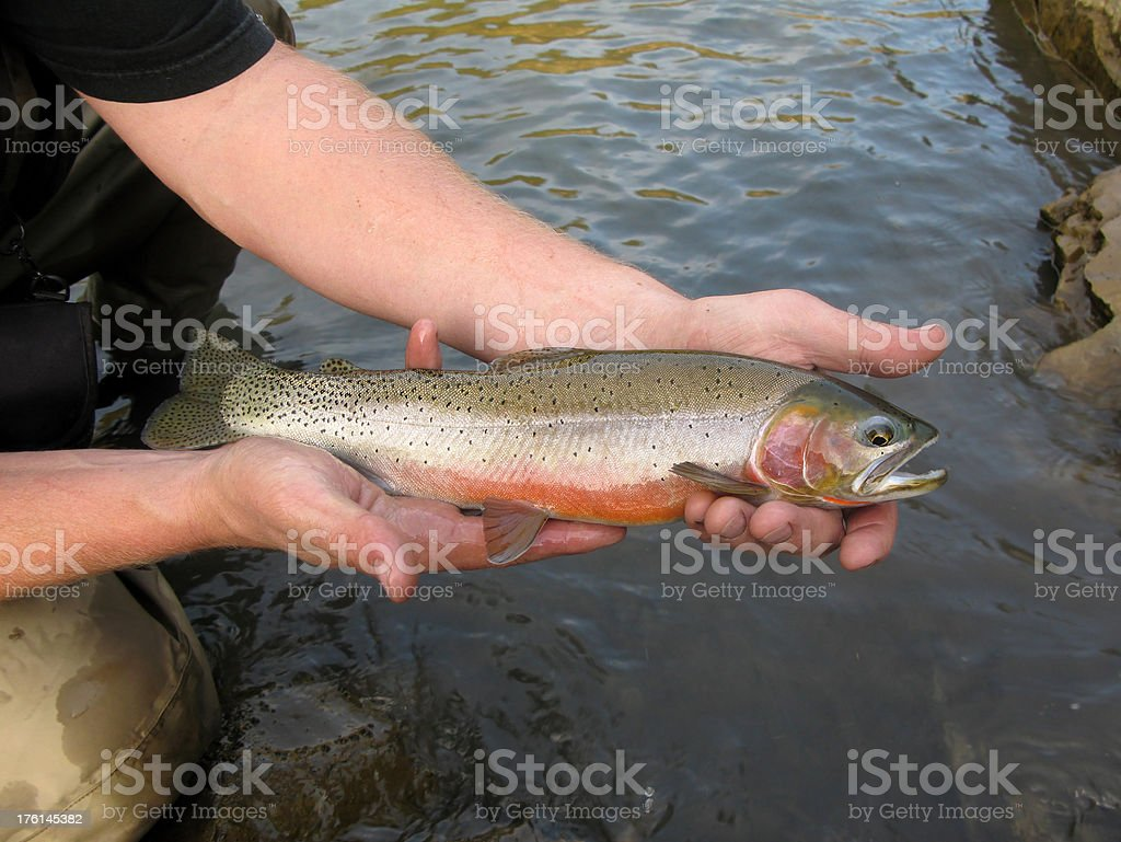 Fisherman Holding Cutthroat Trout royalty-free stock photo
