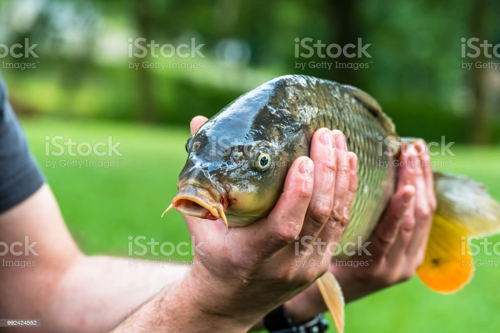 Crafted Common Carp Hand
