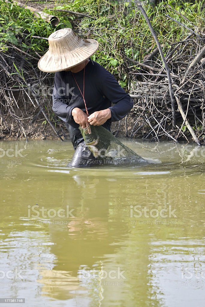 fisherman hunting fish in countryside pond of Thailand stock photo