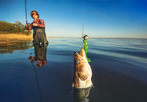 A Fisherman In A Red Shirt Caught A Pikeperch Stock Photo - Download Image Now