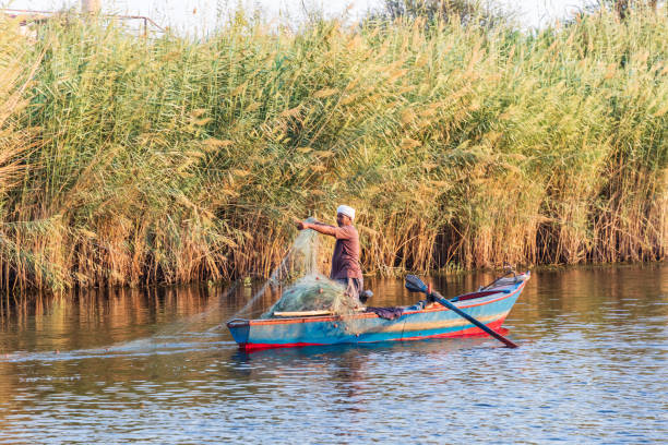 Fisherman in a rowboat, pulling in a net on the Nile River stock photo