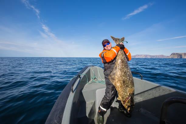 fischer mitten im meer mit einem riesigen fisch - heilbutt stock-fotos und bilder
