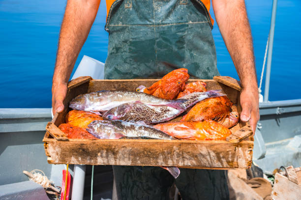 Fisherman is fishing fresh fishes using yellow fishing nets, on fishing boat, Crete, Greece. stock photo