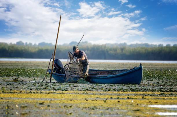 Fisherman netting a trout in Danube Delta, Romania stock photo