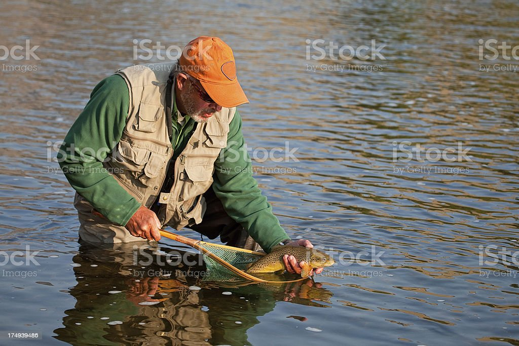 Fisherman Releasing Brown Trout stock photo