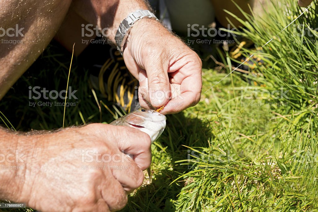 Fisherman removing hook from trout royalty-free stock photo