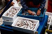 istock fisherman sorting the fish on board 1193760665
