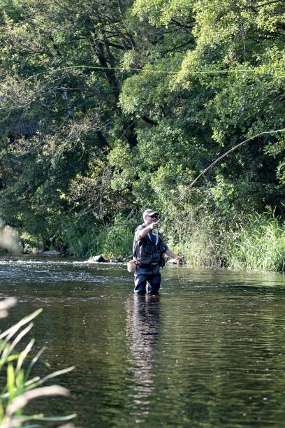 fisherman standing in the river and fly fishing stock photo