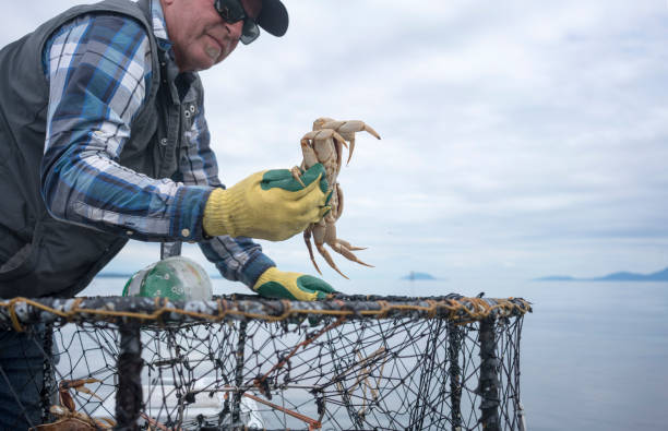 Fisherman throwing a crab back into the water stock photo