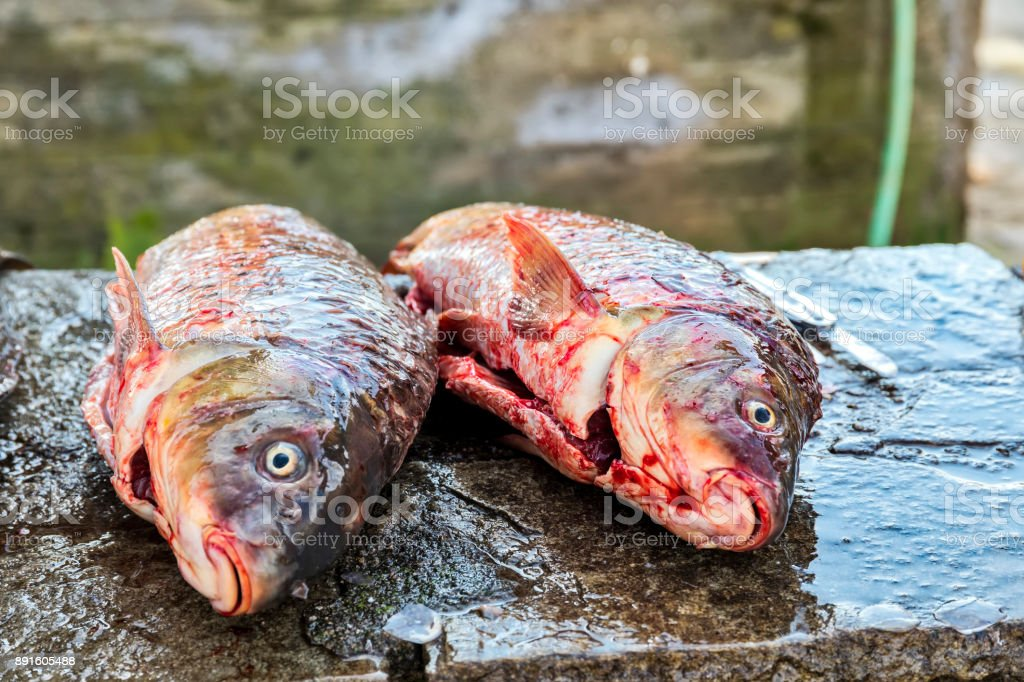 Fisherman to cleans a freshly fish stock photo