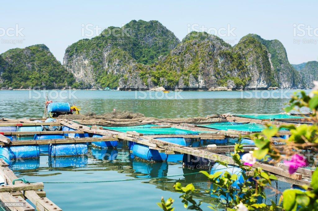 Fisherman village and fishpond near Cat ba island, Vietnam stock photo