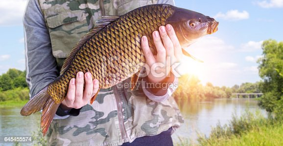 istock Fisherman with carp in hands on a background of the river. 645455574