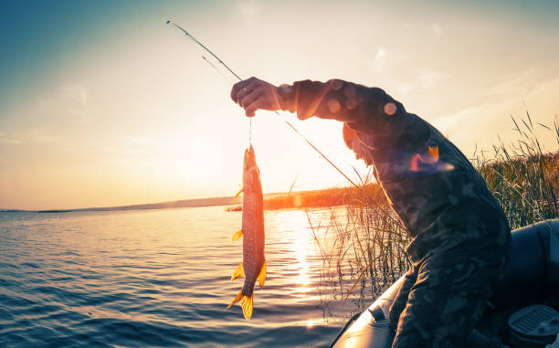 Fisherman with fish Fisherman with fish on the boat at sunset pike fish stock pictures, royalty-free photos & images