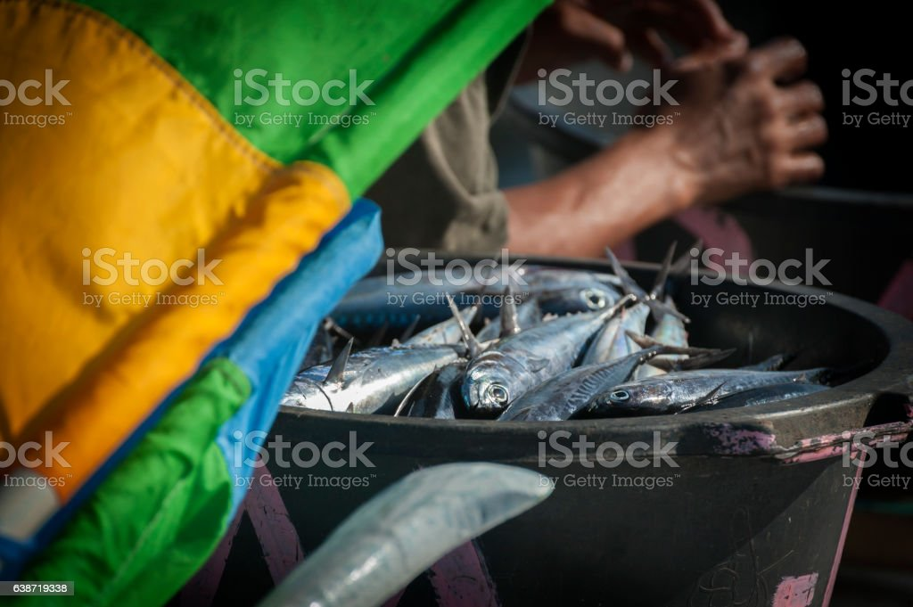 Fisherman's Catch of the Day stock photo