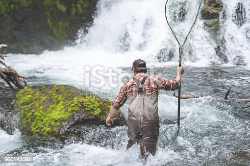 An Alaskan fisherman wades out into white water by a waterfall with a gill net in hand to catch some fish. He is wearing waders and suspenders.