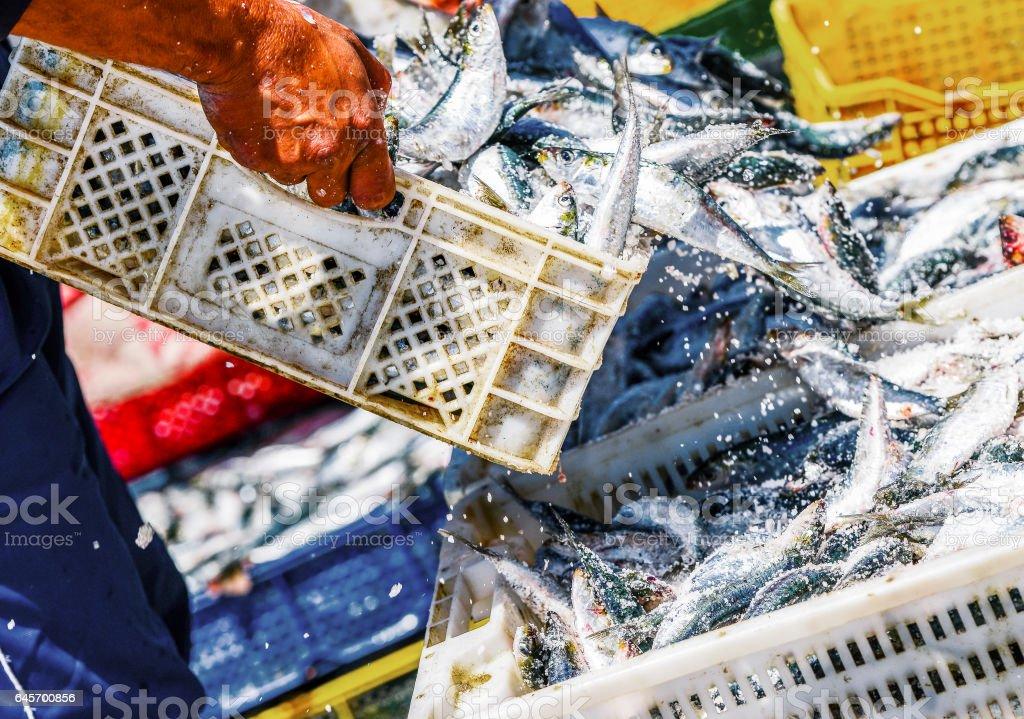 Pescadores organizando recipientes com peixe - foto de acervo