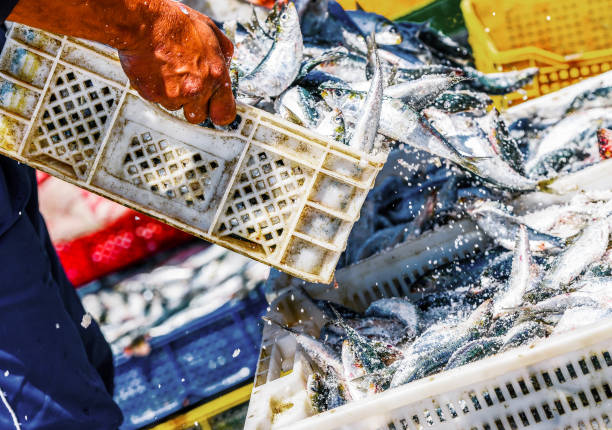 Fishermen arranging containers with fish Two fisherman arranging white containers full of fish on top of each other while coating them with salt fisherman stock pictures, royalty-free photos & images