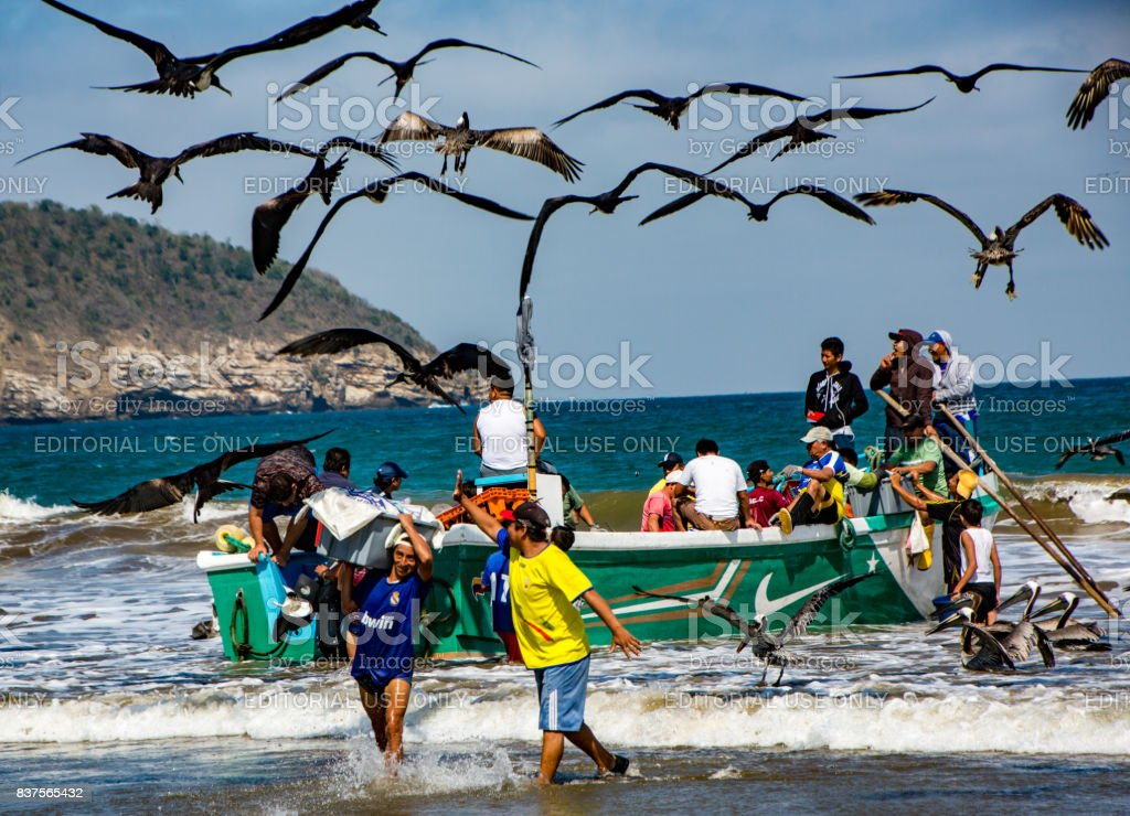 Fishermen carry bins of fish to buyers, chased by birds looking for an easy meal in Puerto Lopez, Ecuador stock photo