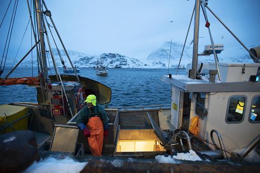 Fishermen fishing skrei cod in the arctic sea