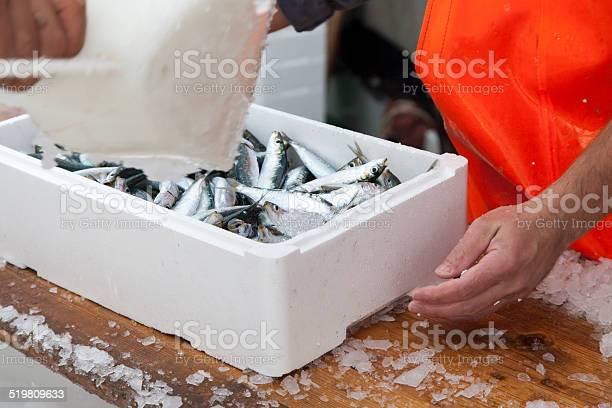 Photo of Fishermen prepare sardines for transportation