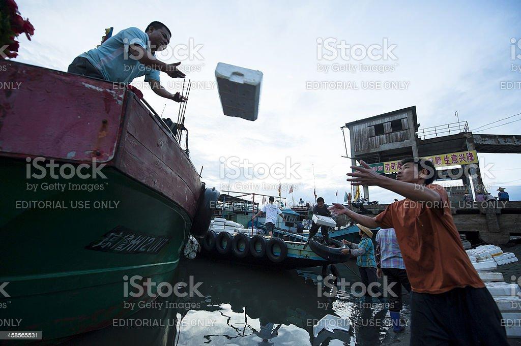 Fishermen unloading fish from fishing boat royalty-free stock photo