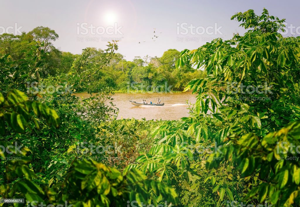 Fishermen's boat navigating on a river surrounded by the jungle stock photo