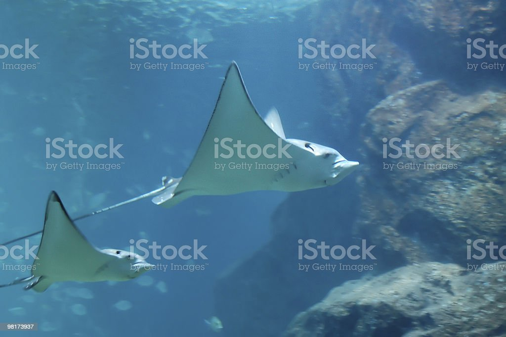 Fishes - #3 royalty-free stock photo