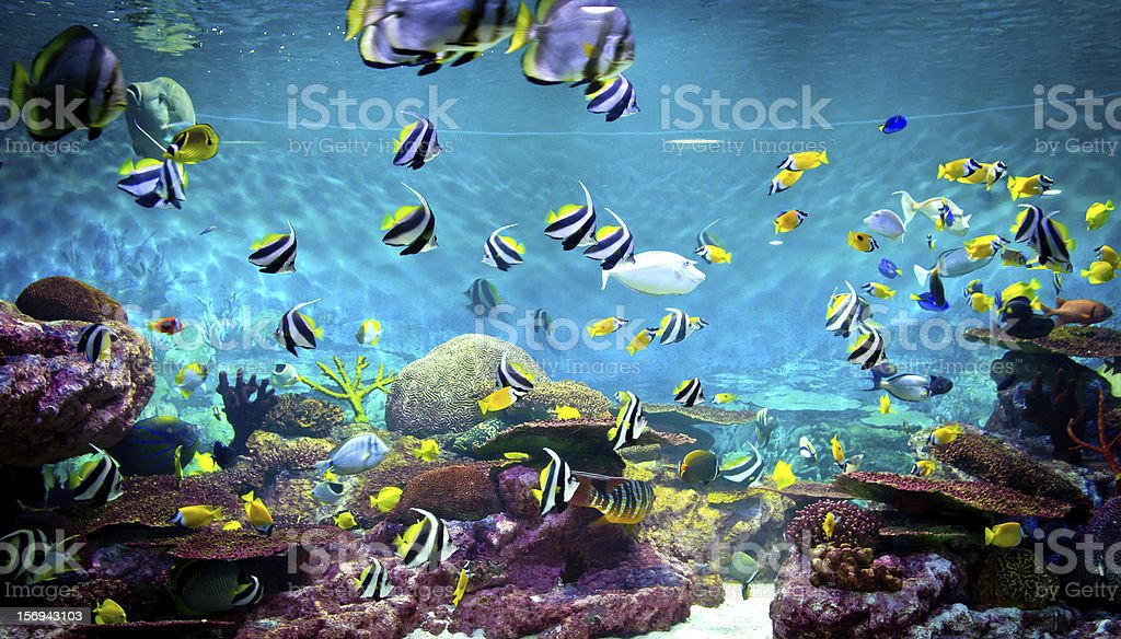 Fishes and coral, underwater life stock photo