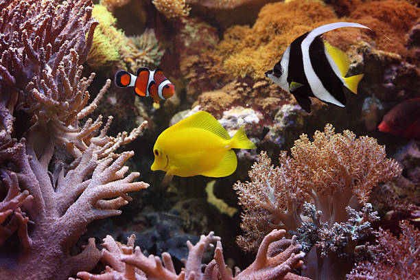 Fishes and corals in the sea stock photo