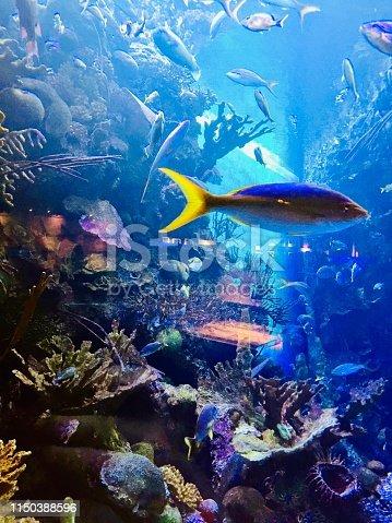 Amazing photos of fish in an aquarium