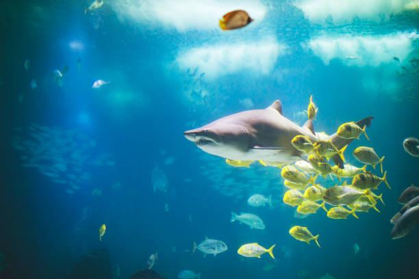Fishes in Lisboa aquarium stock photo