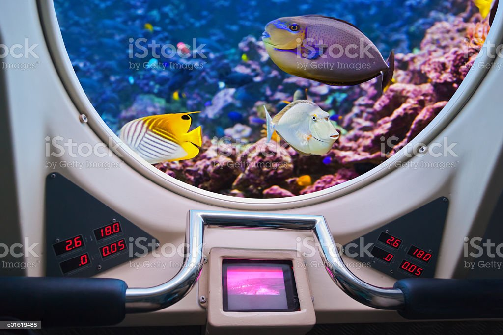Fishes in submarine window stock photo