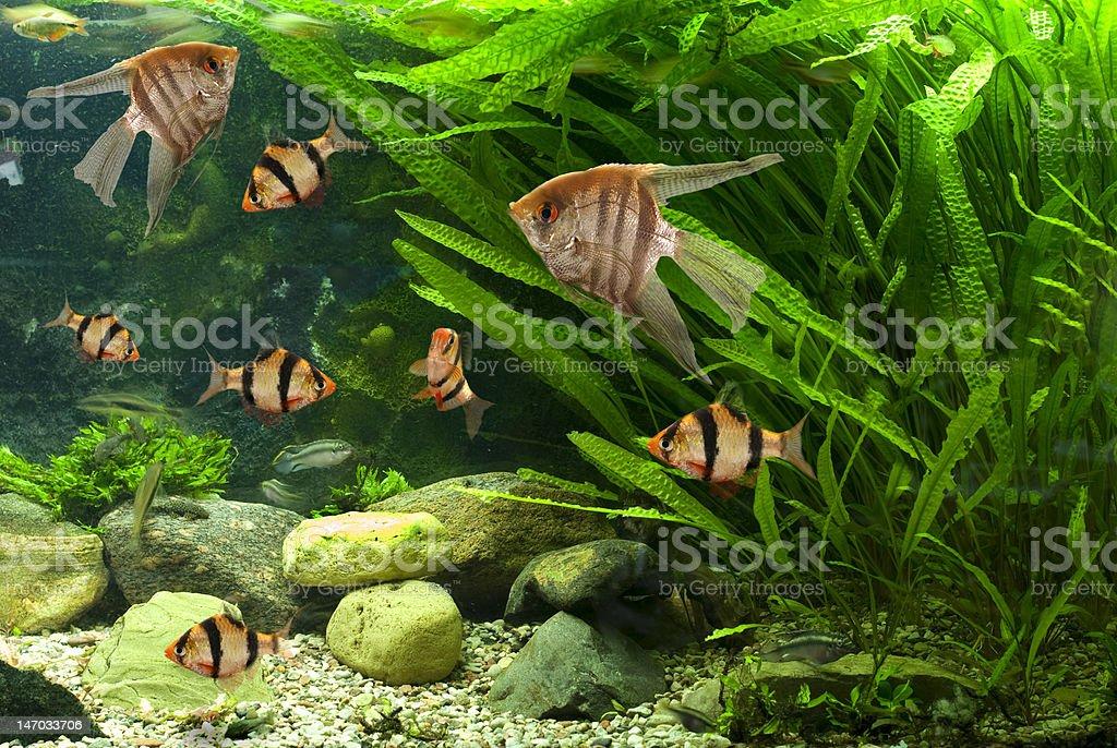 Fishes in the aquarium stock photo