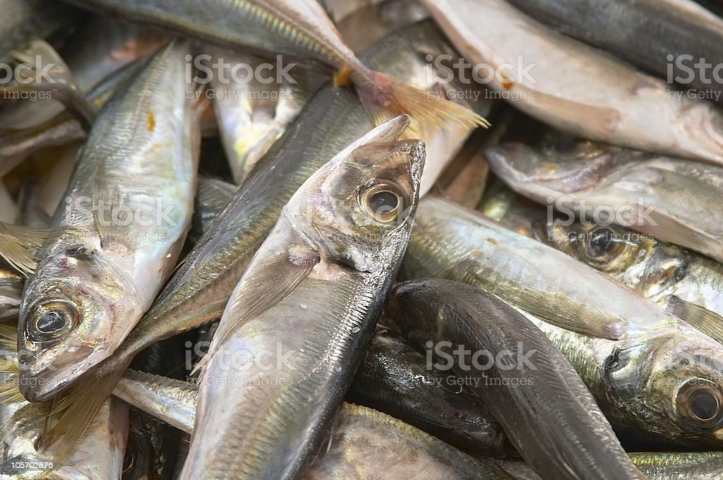Fishes in the market royalty-free stock photo