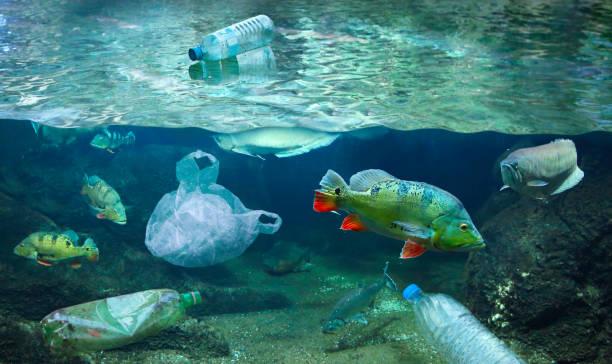 Fische in Mit Kunststoffabfällen verschmutzten Gewässern – Foto