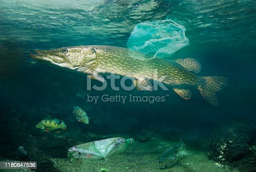 Fishes in water with plastic waste pollution
