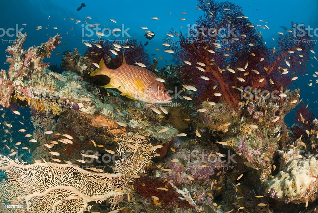 fishes on coral reef stock photo
