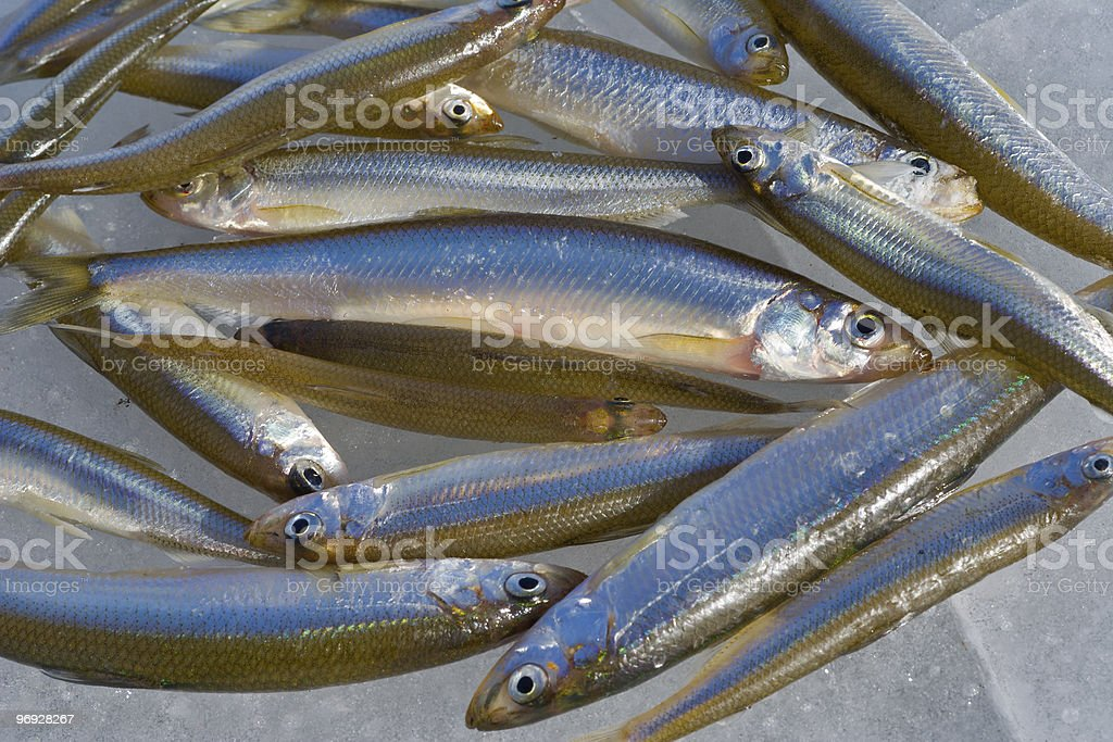 Fishes on ice royalty-free stock photo