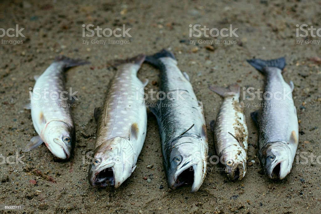 Fishes on the sand. royalty-free stock photo