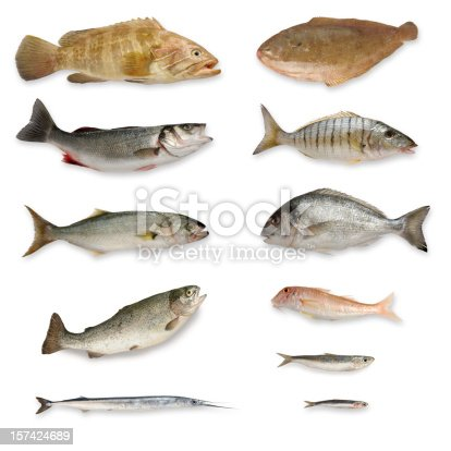 istock Fishes 157424689
