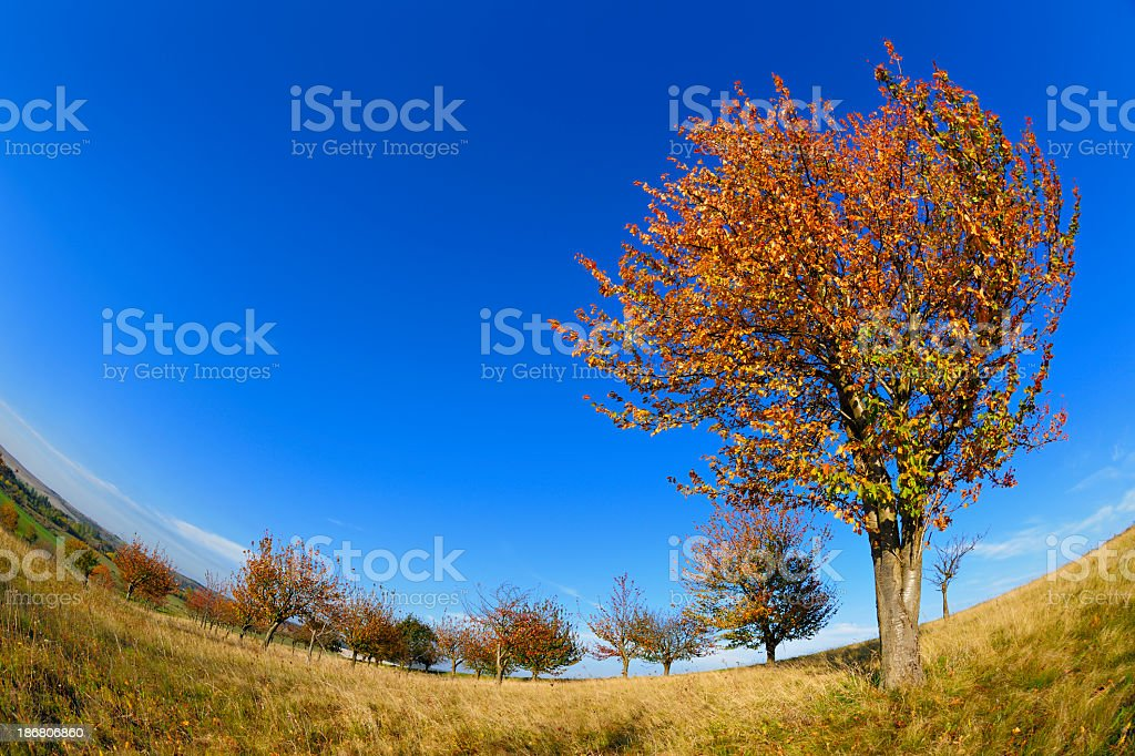 Fisheye Autumn Landscape with Cherry Tree in Orchard royalty-free stock photo