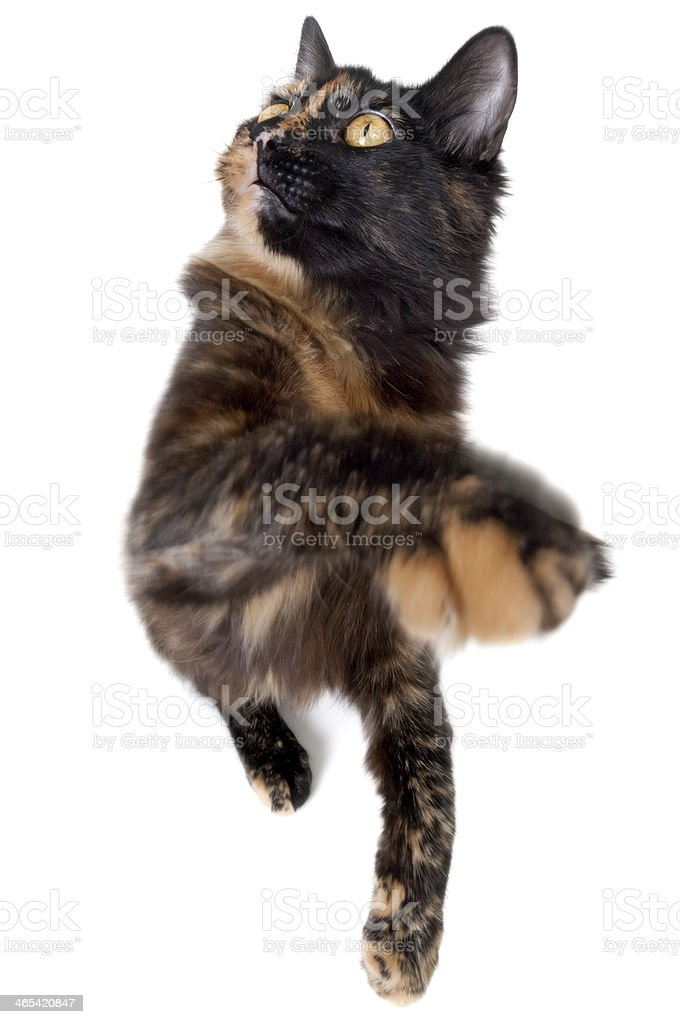 Fisheye Cat royalty-free stock photo