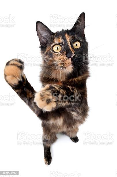 Fisheye cat picture id465503979?b=1&k=6&m=465503979&s=612x612&h= 0ibgsdvkchacsiq7jqqbwchqdl h1gv6sl4rkfujbg=