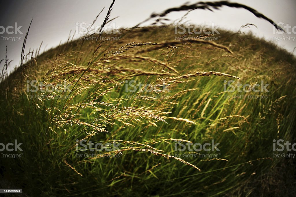 Fisheye Field royalty-free stock photo