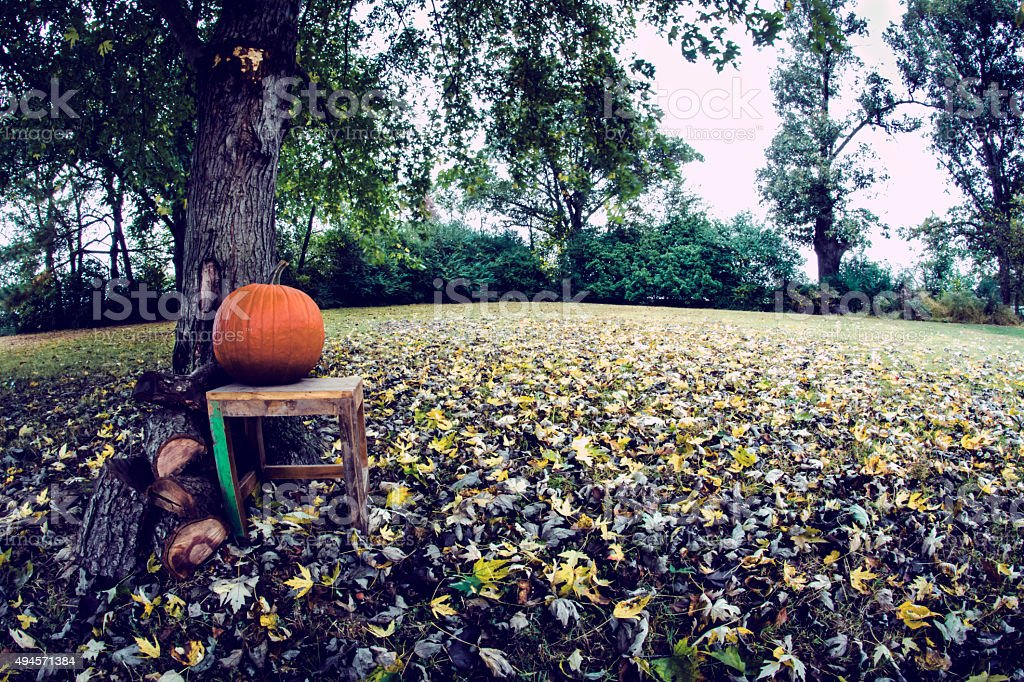 Fisheye of fall pumpkin under a tree stock photo