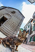 Fish-eye lens look of the old city with cat on sky background. Kotor. Montenegro