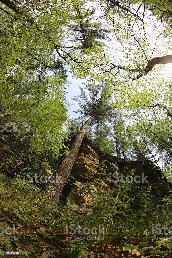 Fisheye view of trees, skies and bluffs royalty-free stock photo