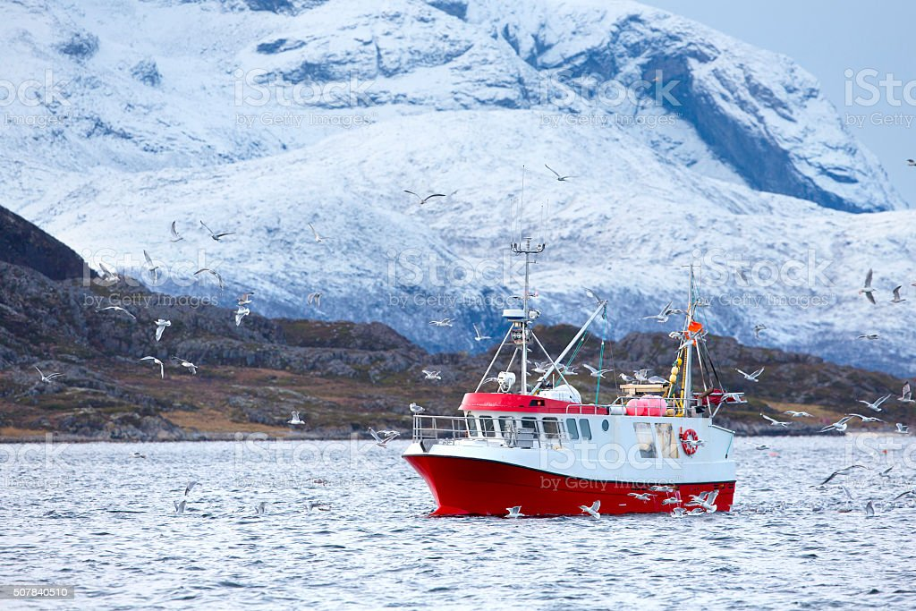 Fishing boat at sea in arctic environment - Royalty-free Animals In The Wild Stock Photo